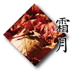 落ち葉とトンボ